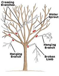 pruning_branchestoremove